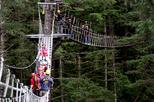 Ketchikan Shore Excursion: Rainforest Canopy and Zipline Adventure