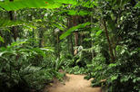 Cairns Sightseeing Tour Including Botanical Gardens, Mt Whitfield, and the Dome