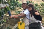 Coffee Farm Tour & Horseback Riding: All in one great and unforgettable day