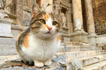 Ephesus Shuttle : Small Group Excursion to Ephesus and Temple of Artemis