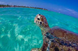 St John Snorkel Tour aboard New Horizons and Breakaway Charters