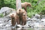 Alaska Bear Viewing Tour to Wolverine Creek from Soldotna, Alaska