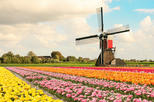 Sightseeing Tour to the wind mills, Volendam, Edam and Marken