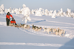 Lapland Christmas Husky Camp Visit and Sled Ride from Rovaniemi