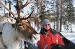 Lapland Snowmobile Safari to a Reindeer Farm from Rovaniemi