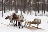 Lapland Reindeer Sleigh Ride and Traditional Sami Lunch from Tromso