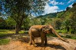 Elephant Care, Feeding, and White Water Rafting
