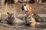 Ranthambore Wildlife Private Day Tour