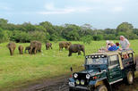 Wild Safari Udawalawe from Bentota