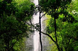 Rainforest Waterfall Excursion