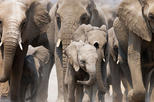 10 Days Namibian Family Adventure Safari (Accommodated )