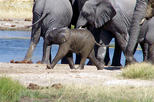 3 Days Etosha Wildife Safari-Namibia (Accommodated)