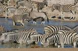 3 Days Etosha Wildlife Safari (Camping)