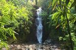 Jungle Waterfall Hike