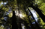 Muir Woods Visit with Scenic Marin Headlands Tour