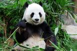 Essential Chongqing Day Tour with Giant Panda Viewing