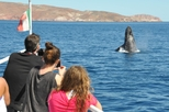 Whales of the Baja Expedition from Los Cabos