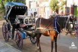 Day Tour to Luxor City Tour By Horse Carriage in Egypt