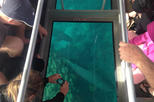 Ningaloo Reef 1-Hour Glass Bottom Boat Tour: Coral Viewing Fantasy Tour