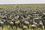 10 Days Serengeti Wildebeest Migration Safari