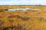 Audio Tours to Varnikai Path in the Swamp