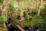 Private Adventure to Phnom Kulen & Beng Mealea from Siem Reap