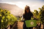 E-Bike Wine Tour to the Comte Peraldi Vineyards in Ajaccio - Corsica