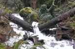 2-Hour Guided Rainforest Hike
