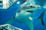 (3 DAYS 3ATTRACTION TOURS SPECIAL PRICE) SHARK DAVING & CAPE PENINSULS& WINELADS