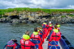 Express Small-Group Puffin and Bird Watching Tour from Reykjavik