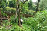 All-Inclusive Private Day Tour of Panda Holding Experience in Chengdu