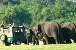 Private Jeep Safari at Minneriya National Park from Habarana
