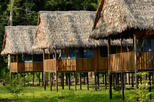 3-Day Amazon Wildlife Observation Tour at Tamshiyacu Reserve from Iquitos