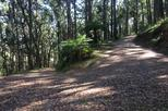 Half-Day Mount Dandenong Trail Running Tour Including Breakfast