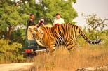 2-Days Private Ranthambhore Tiger Tour from Jaipur