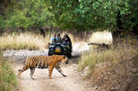 4 Days Fort-Palace-Tiger-Taj Mahal Tour-Jaipur-Ranthambore-Agra
