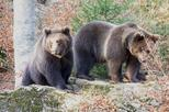 Bearwatching Day Tour in High Tatras from Poprad