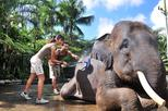Cosmo Bali Jumbo Wash The Elephant With Transport at Mason Adventures