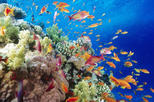 Snorkeling Cruise from Hurghada to Mahmaya, Giftun Islands