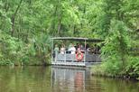 90-Minute Jean Lafitte Swamp and Bayou Tour with Transportation