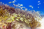 Half day snorkel experience in the stunning Playa del Carmen reef