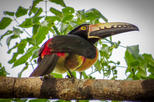 Private Tour: Bird Watching from the Riviera Maya