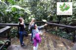 Cinco Ceibas Rainforest Reserve Bird Watching Tour from San Jose
