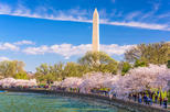5-Day Washington DC Cherry Blossom Festival from Boston