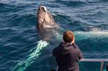 Private Tour: Newfoundland Puffin and Whale Watch Cruise with Picnic Lunch