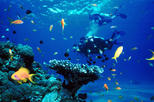 Diving at Mediterranean Sea