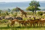 2 DAYS - SHORT SAFARI TO MIKUMI NATIONAL PARK