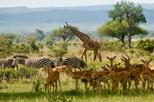 2 Days guided tour to Mikumi National Park from Dar Es salaam