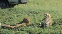 Nairobi National Park Tour, Nairobi, Full-day Tours