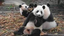 One Day Giant Panda Leisure Private Tour in Chengdu, Chengdu, Day Trips